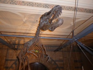 natural-history-fossil-1